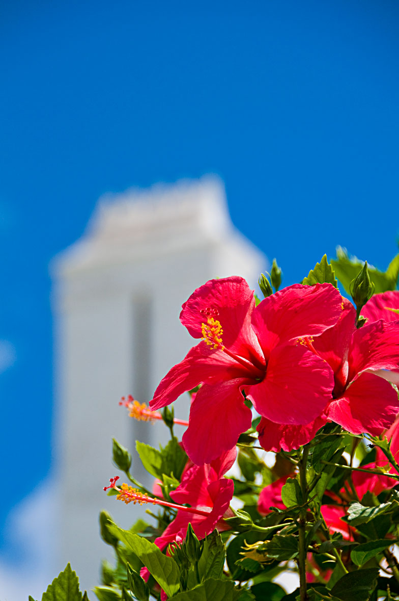 Hibiscus and Chimney